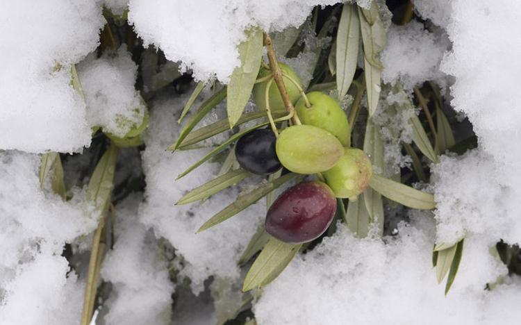 időjárás mezőgazdaság