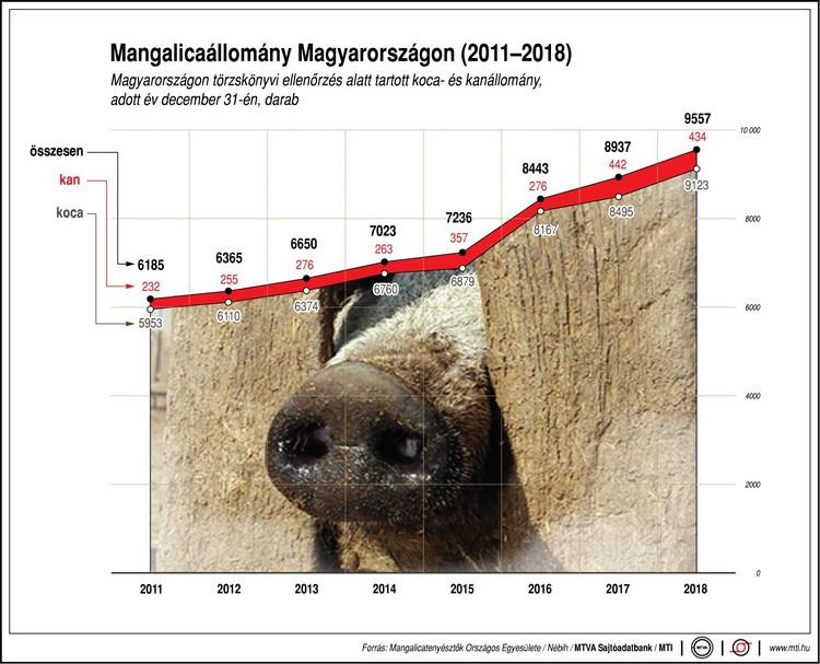 mangalica állomány