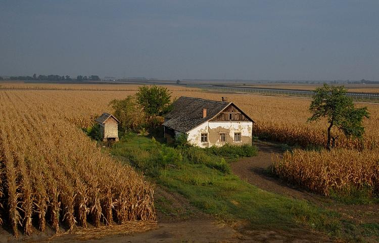 Magyar tanya