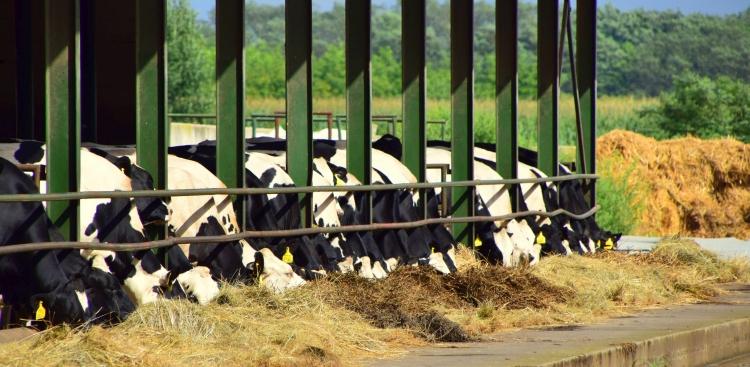 tejágazat