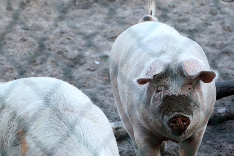 Mezőgazdaság, állattenyésztés