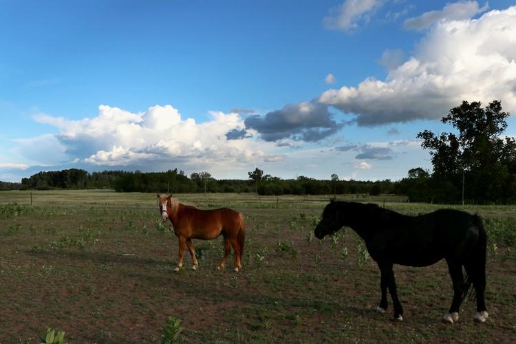 Ló és mezőgazdaság