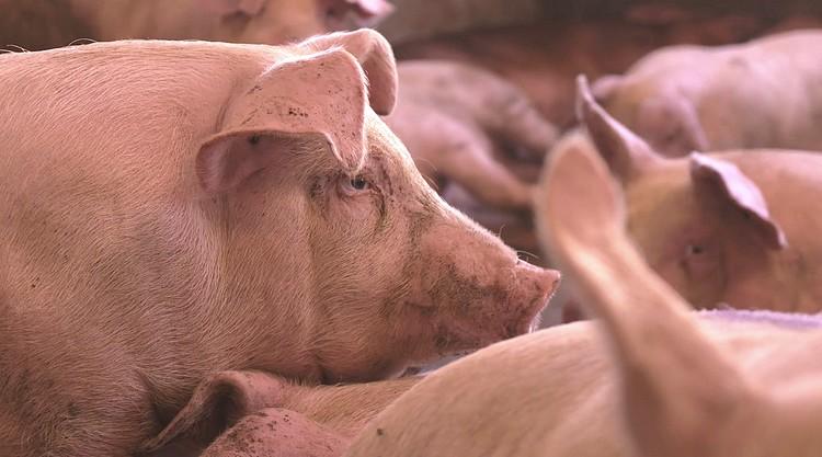 Hús és mezőgazdaság