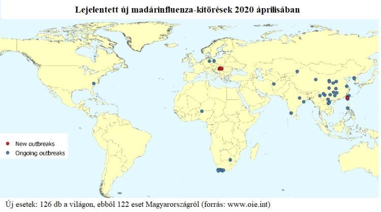 madarinfluenza