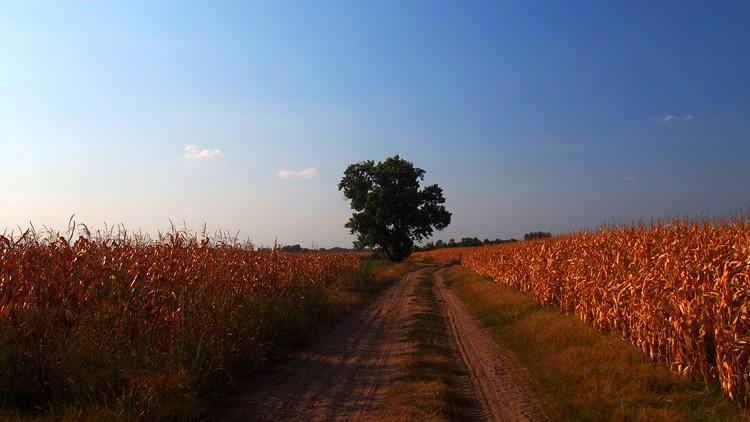 Vetésforgó, mezőgazdaság