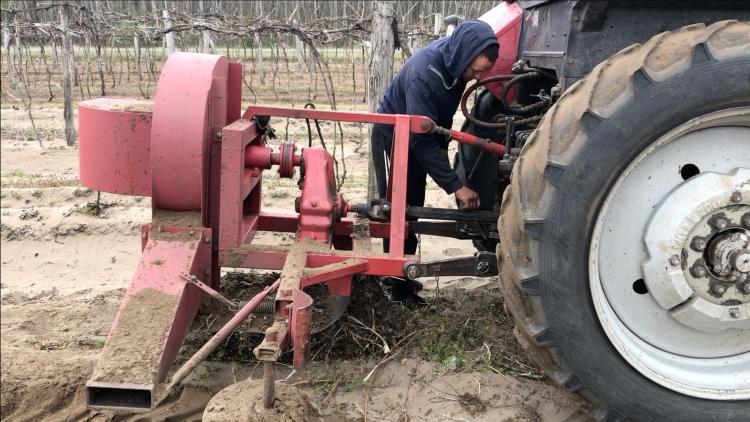 Bakhátlebontó-gép beállítása szőlőben