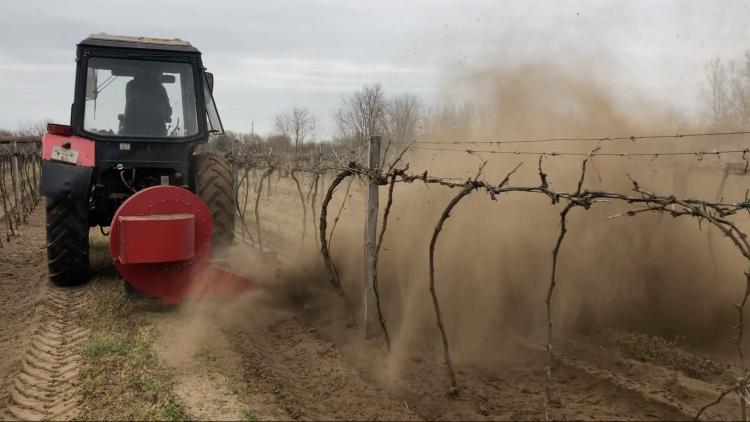 Bakhátlebontás talajfújással, alföldi szőlőben