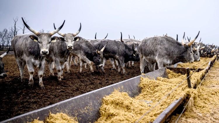 Mezőgazdaság, bio, élelmiszer-feldolgozás