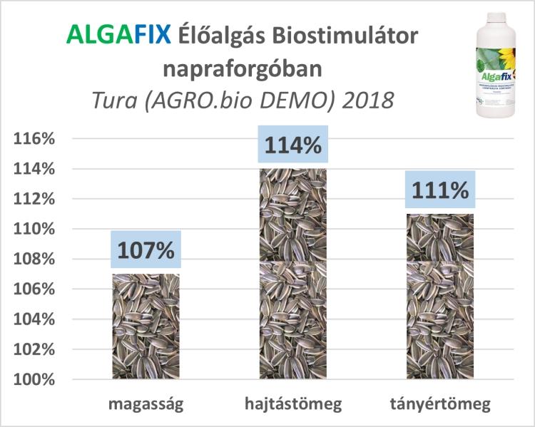élő alga hatása