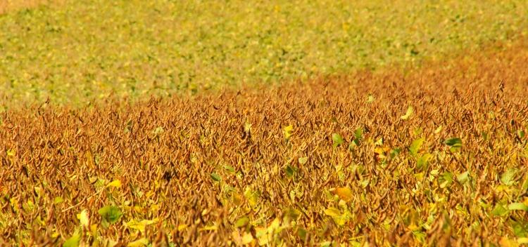 klimavaltozas rizs