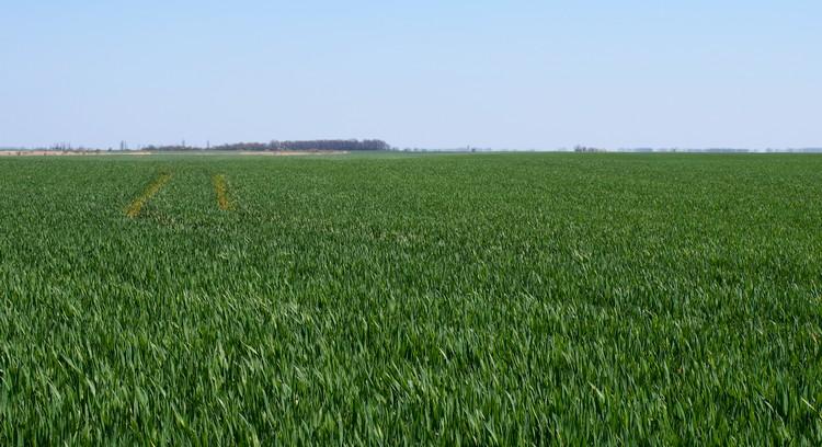 Mezőgazdaság, agrárkamarák