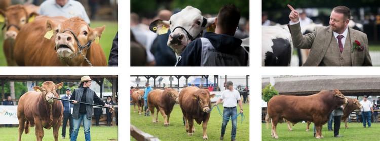 Alföldi Állattenyésztési és Mezőgazda Napok 2021