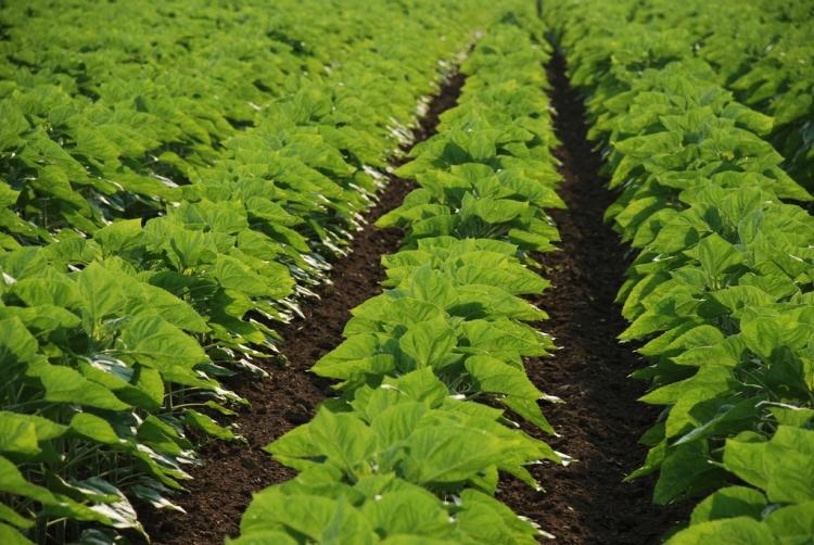 Mezőgazdaság és Corteva