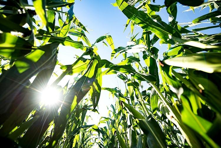 Mezőgazdaság, Pioneer, Corteva
