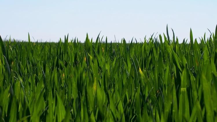 Mezőgazdaság, hideg és aszály