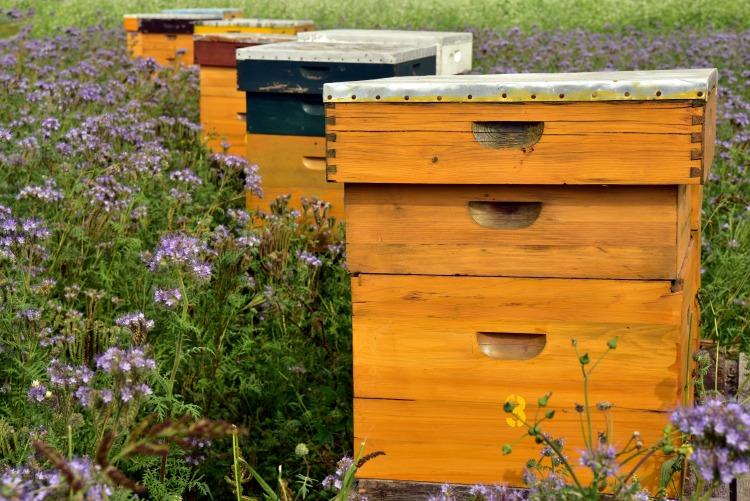 méhkaptár