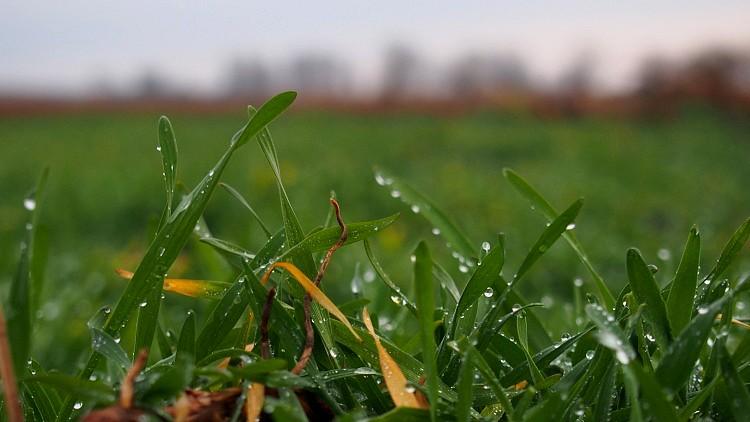 Mezőgazdaság, biztosítási díj