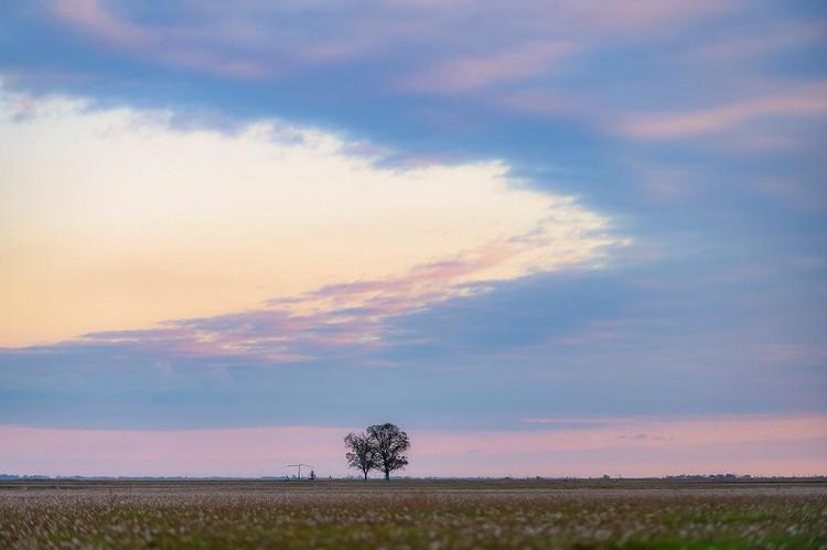 Mezőgazdaság, gyepgazdálkodás
