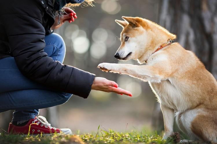 Mezőgazdaság, ember és kutya