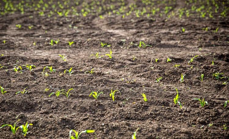 Mezőgazdaság, esik eső