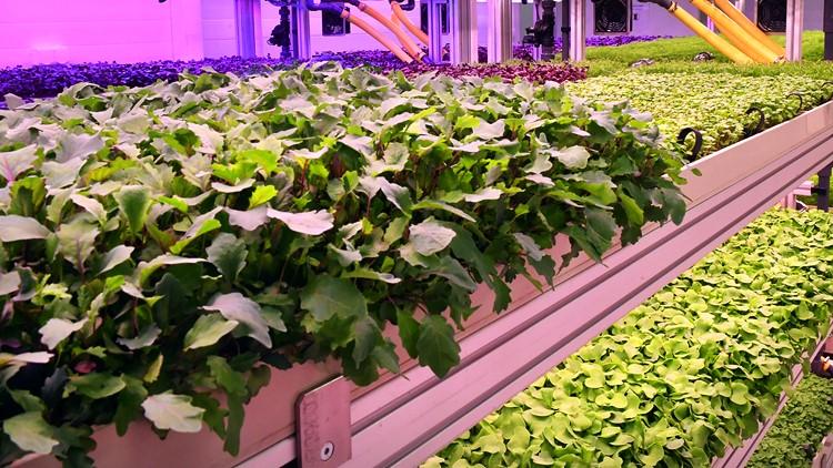 Kutatás és mezőgazdaság: a vertikális farm