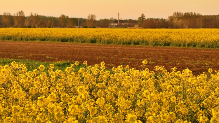 Mezőgazdaság, vetés