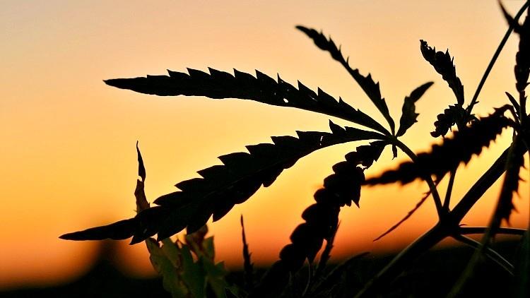 Mezőgazdaság, parlagfű, bírság