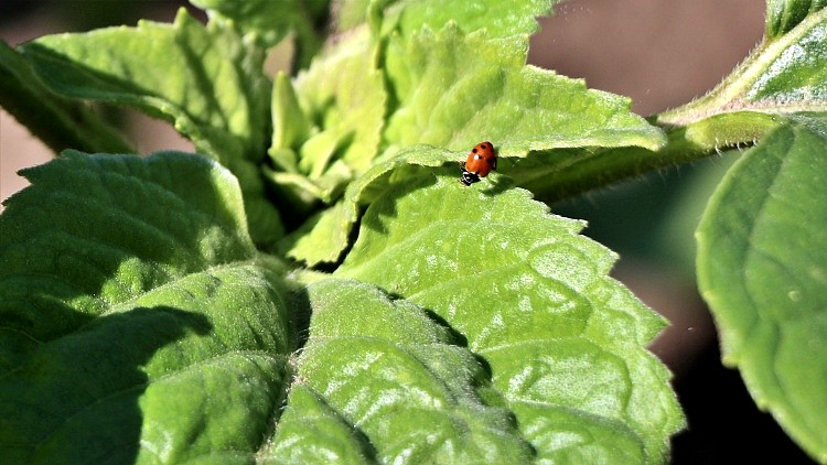 Mezőgazdaság, kölcsönszerződés vetőmagkutatásra