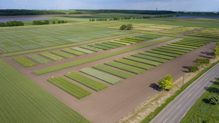 Mezőgazdaság, Martonvásár