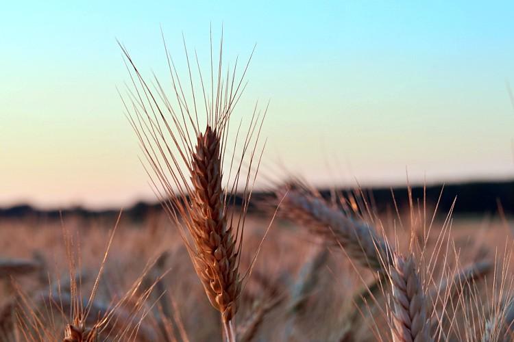 Mezőgazdaság, felvásárlási árak
