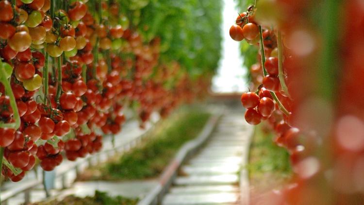 Mezőgazdaság, kertészeti támogatás