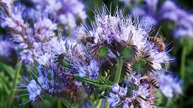 Mezőgazdaság, mézelő méheink