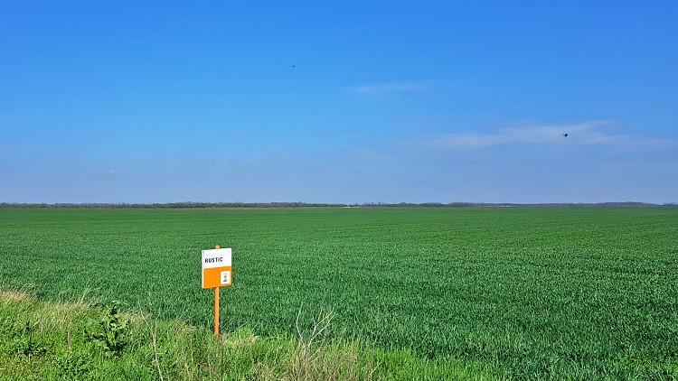 Mezőgazdaság, extenzív