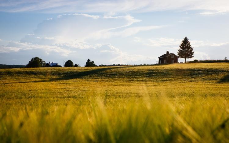 szántóföld, ház