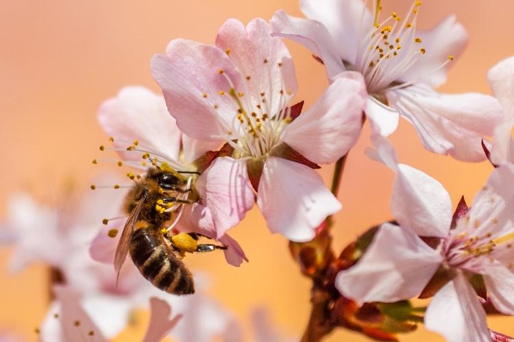 méh, virágok
