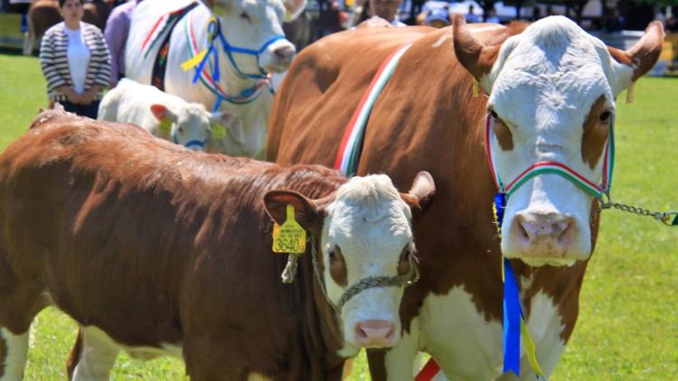 Mezőgazdaság, állattenyésztés, magyartarka
