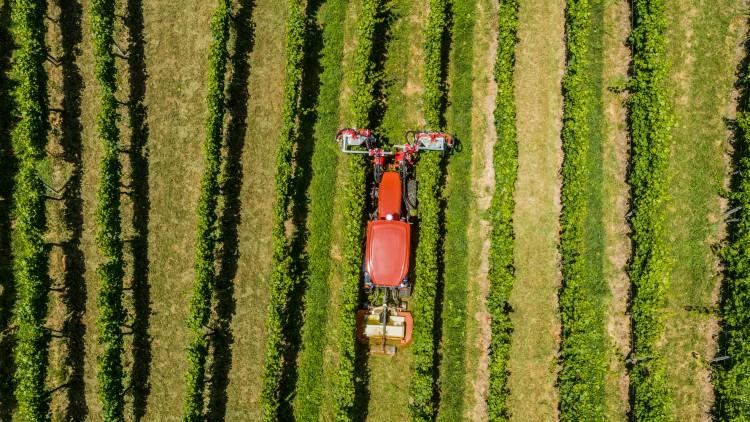 Ültetvényes megoldások a Kubotától a mezőgazdaságban