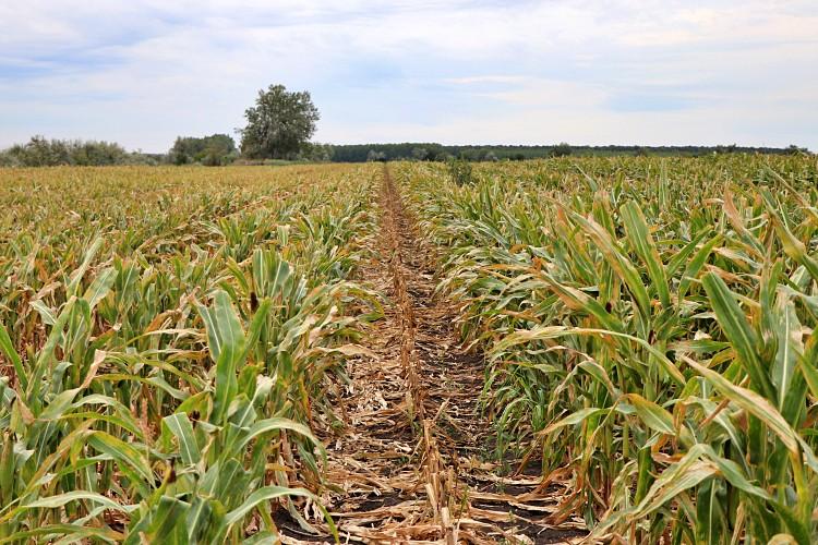 Mezőgazdaságban a csapadék hiánya nagy károkat okozhat