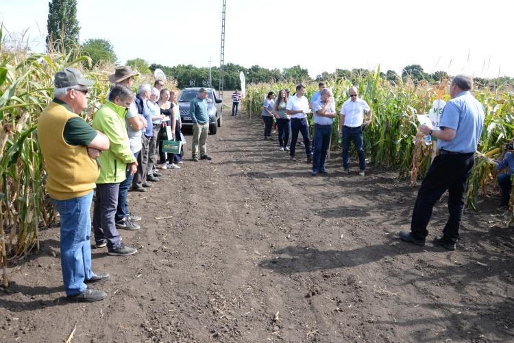 kukorica szántóföld bemutató emberek pick-up teherautó