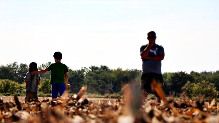 Több korosztály a kukorica tarlón